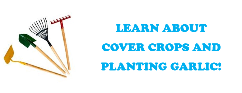 Learn About Cover Crops and Planting Garlic! visual